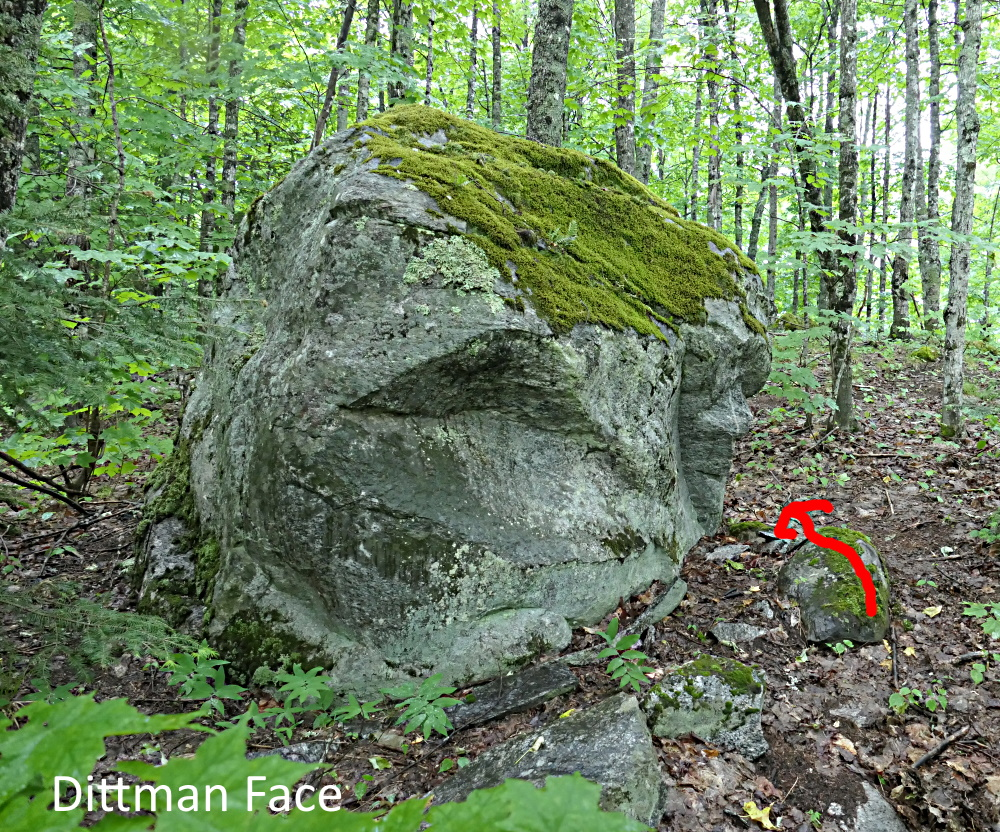 Dittman Face